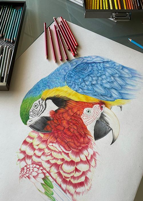 Vogel Illustration mit Farbstift von Frank Brunnée Grafik Design.